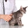Ветеринарные клиники в Канаше